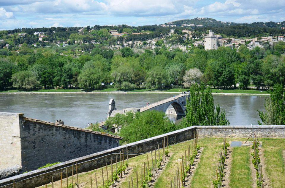 winnica w Avignon