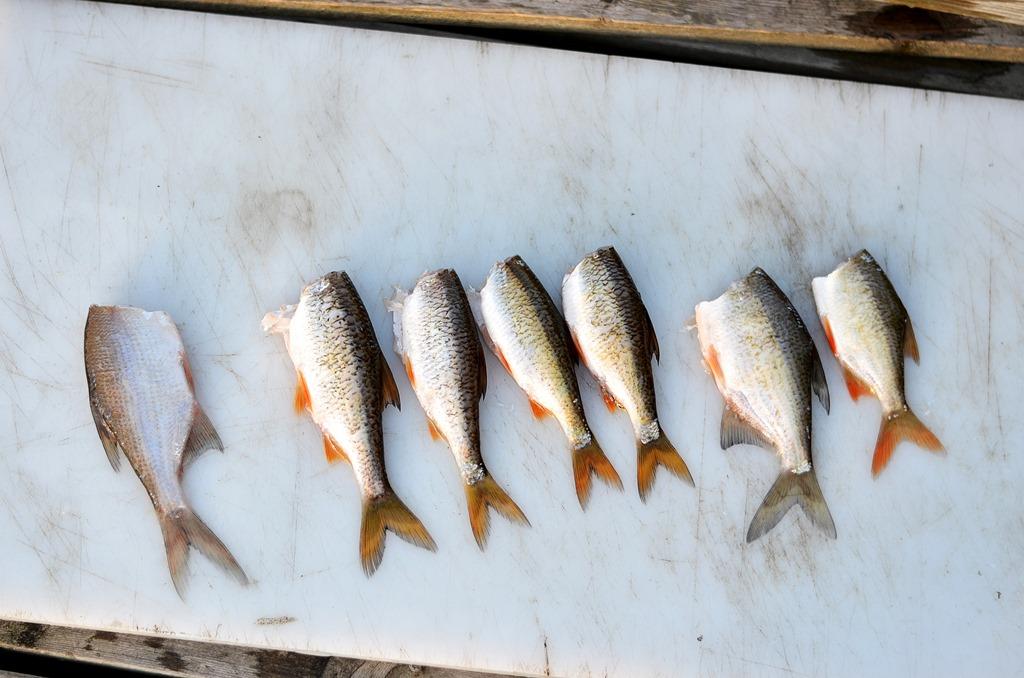 Przegląd małych rybek